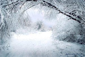 capture winter photographs